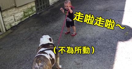 這隻36公斤的胖狗狗一點也不想被小男孩遛的樣子,會讓你好像看到每個星期一上班前的自己。