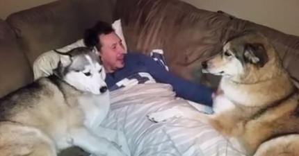 右邊這隻狗狗一直得不到主人的注意,拼了命想要得到寵愛的模樣真的太心酸了!