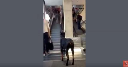 你無法看完這支影片的原因就是為什麼狗狗是比人類還要更好的動物!