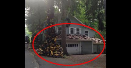 一名網友上傳了他的鄰居家的照片,我看到才知道有多麼恐怖...