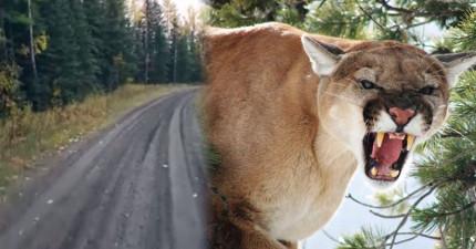 這名男子在走山路時碰到兩隻想要吃掉他的美洲豹,接下來發生的事情讓我快得心臟病了!