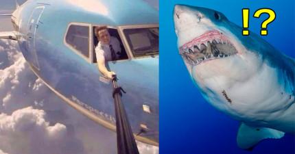 根據統計結果,今年「被自拍棒殺死」的人數已經比「被鯊魚咬死」的人還多了!