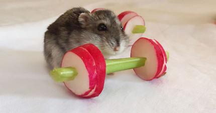 網友打造了一間「蔬果健身房」想讓寵物倉鼠變瘦,後來卻發現倉鼠們跟人類真的太像了!