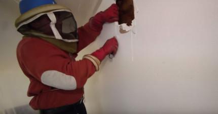 這名男子發現有蜜蜂盤旋在他家外,請專家打開家裡牆壁後才發現...WOW!