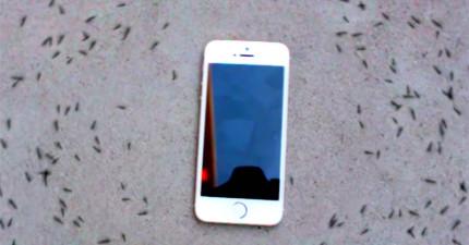 連專家都搞不懂為什麼螞蟻會在「手機響起」時會做出這麼詭異的事!