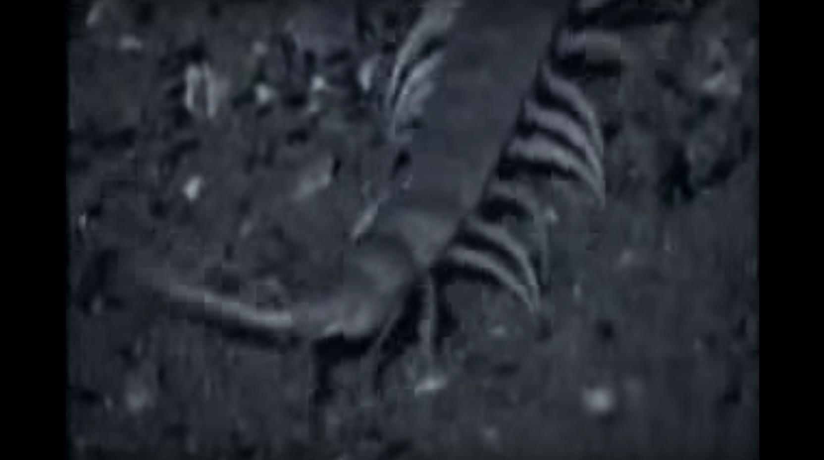 這支「巨型蜈蚣把大蝙蝠給獵殺並且吃掉」的影片會讓你重新認識蜈蚣的可怕!