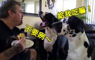 這隻狗狗必須說出「我愛你」才可以吃三明治,結果主人故意為難她真的太爆笑可愛了啦!