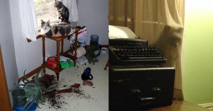 23張照片證明「跟貓咪住在一起」是世界上最危險的行為!