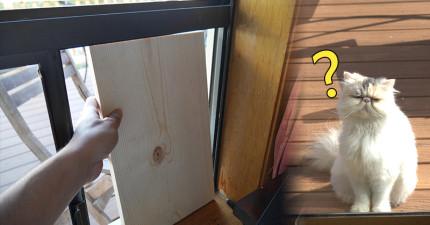 他拿這一片木板和和一切素材,就成功做出了會讓貓咪甘願為奴的「終極貓咪穿梭門」!