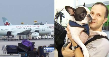 這位飛行員為了救狗狗的命決定多耗費32萬改變航向,乘客後來說的話也讓我覺得好感動!