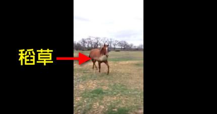 這個主人不知道為什麼他的馬咬著稻草奔跑,結果當看到時...「喔...原來在泡妞啊!」