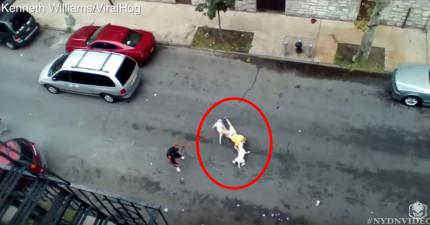 閉路電視拍到一名女子指示兩隻鬥牛梗去攻擊男子,傷勢嚴重到旁邊的神父都當場為他舉行臨終聖禮。