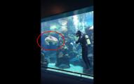 潛水員原本忙著清理魚缸,沒想到鯊魚竟突然游到他身邊做的事情讓訪客都超傻眼!