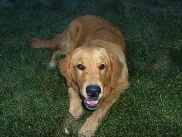 狗狗每天超累跑到她家睡 她忍不住寫信給狗主人...對方回「能一起嗎?」才發現爆笑內幕!