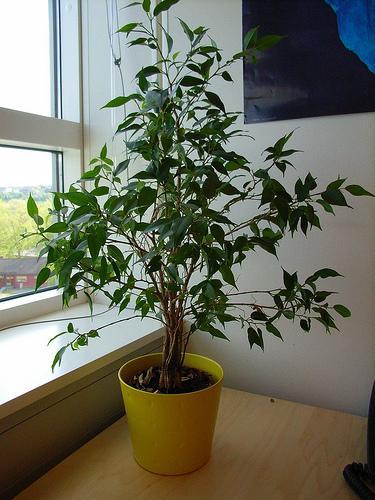 18種連NASA都認可「最能淨化室內空氣」的植物。