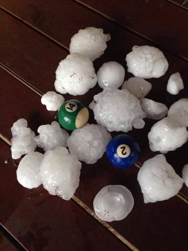 Okay, so this is not a dangerous animal. But who would want to be stuck in a storm when hail bigger than pool balls is falling out of the sky? Ouch.