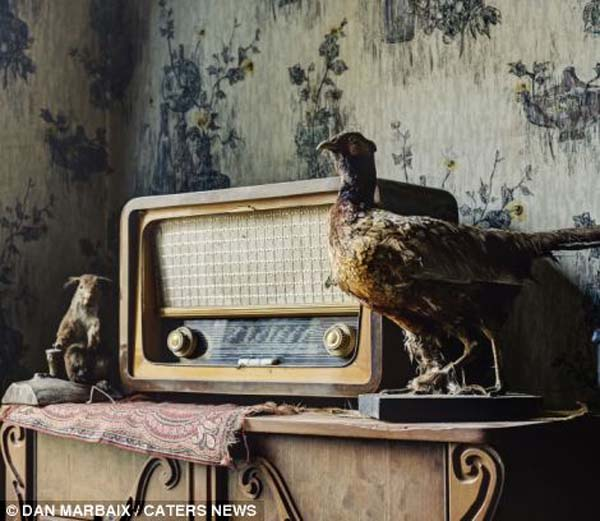 Some places are left in the state they were abandoned in. As you can see from this Belgian house, the radio and stuffed pheasant decorations were still placed on the mantle.