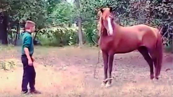 這匹寵物馬突然撞倒這名6歲男童後,下一秒的可怕慘劇會讓所有男士們放聲尖叫啊 (發抖)!