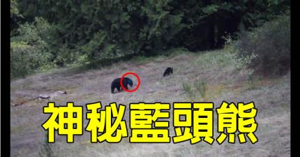 有人在郊外公路目擊這隻「藍頭熊」,卻沒有任何人知道背後的原因...