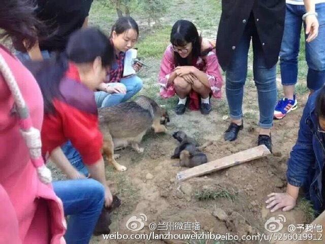 中國保全因校園流浪狗太多而採取的「解決方案」讓學生們都氣瘋並立即前往解救!