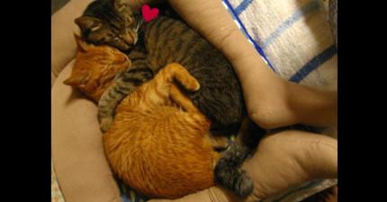 因為貓咪很愛躺他腿上讓他有時暫時癱瘓,於是這名網友DIY出這個「腿型貓咪床」來減輕全世界貓主人的負擔!