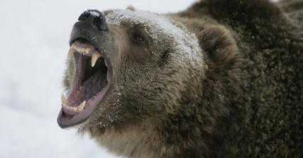 這名男人與181公斤重的大灰熊正面交鋒時,沒想到奶奶之前給他的建議竟然救了他的命!