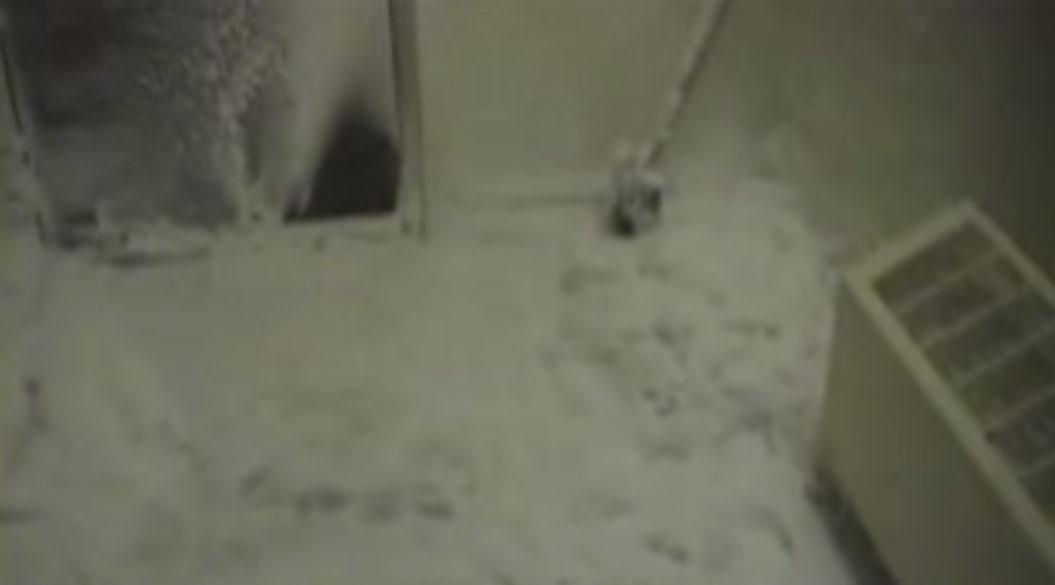 在她把門打開的瞬間,你就知道為什麼「普通人到南極一定會被秒殺!」
