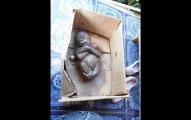 他們找到這隻紅毛猩猩寶寶時他已經變成「木乃伊」了,但急救後奇蹟就發生了!