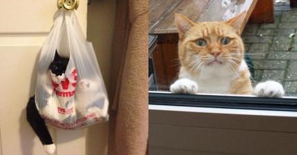 22隻「貓生中不小心做錯抉擇」的超後悔爆笑貓咪。