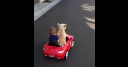 從背影看到這台小車駛過還不覺得怎樣,一轉彎才發現...原來駕駛根本不是人類啊!