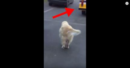 當這隻狗狗一聽到冰淇淋卡車開到家附近時,他接下來做的事情會讓你找到遺失的快樂!