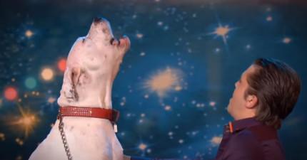 這隻狗狗一開始上台亂叫沒人懂在做什麼,直到她漸入佳境整個震驚全場!