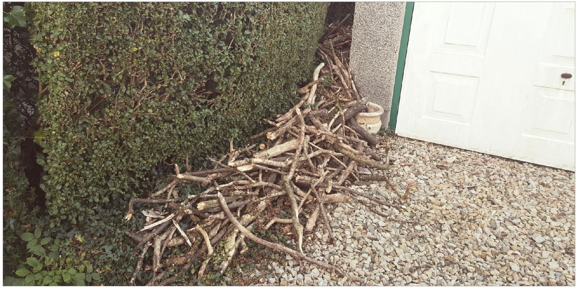 這隻狗狗收集外面撿到的樹枝已經撿到上癮了,有一天主人拍到的「車子快出不來」的畫面會讓你噴笑!