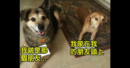 24隻犯了滔天大罪想要你的原諒的淘氣狗狗。