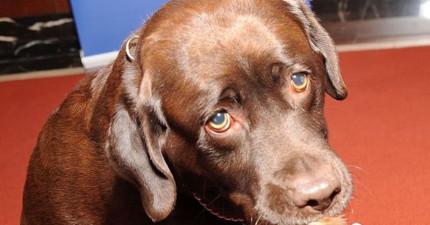 這名25歲的女人在打獵時腳部被散彈槍射傷,回頭看發現到兇手居然是她最可愛的狗兒子!
