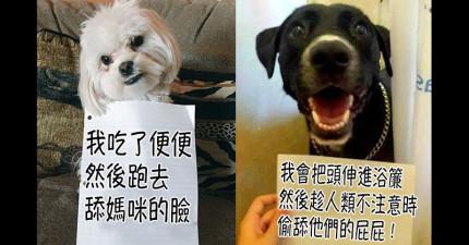 23隻「和悔過書合照但看起來完全不後悔」的犯錯被懲罰狗狗!