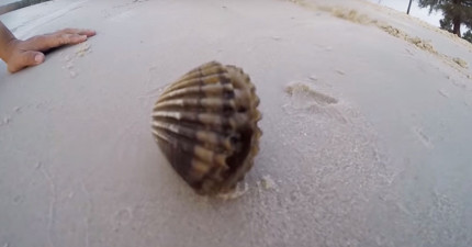 他們在海邊發現這個詭異的貝殼,剝開後跑出的詭異生物會讓你忍不住驚呼:「怎麼會是你?!」
