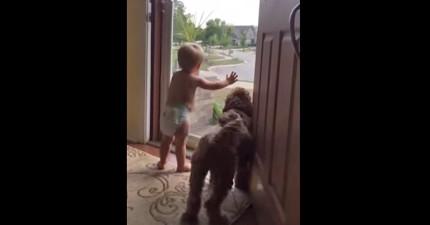 當爸爸回家時這個小寶寶跟狗狗有完全一樣的反應!從15秒起我已經笑炸了!