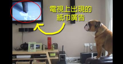 在這隻狗狗聽到廣告中的大象一叫,他接下來發出的聲音會讓你很吃驚!
