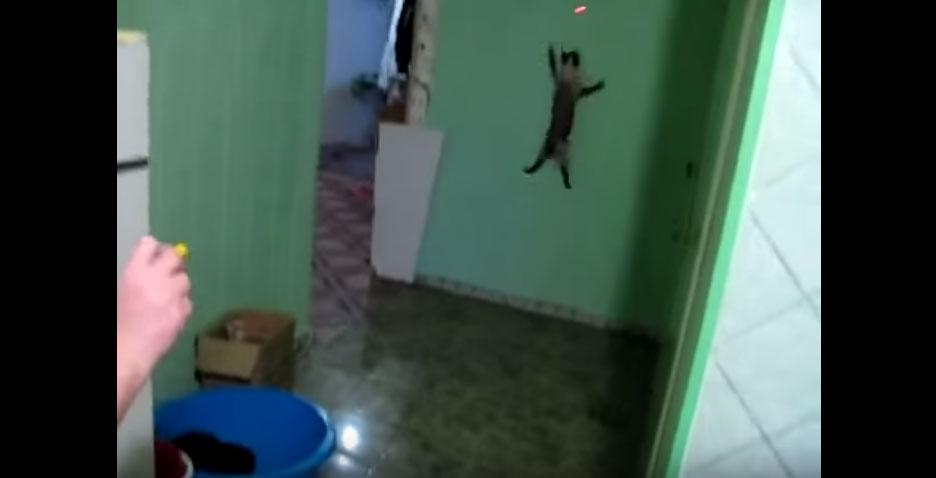 網上出現了一隻已經進化成蜘蛛的貓咪!當你把紅外線對到牆上時...根本就是一隻蜘蛛啊!