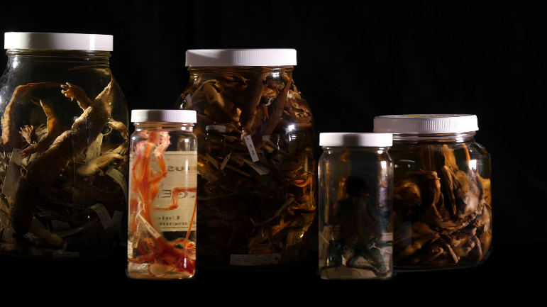 這些甲蟲神速將屍體啃食剩骨的畫面超恐怖,但背後竟然對人類有超棒的貢獻?!