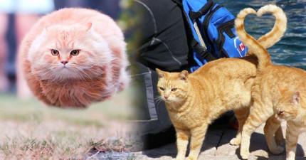 22隻「比你會捕捉完美瞬間」的超上相貓咪就是你今天最需要的紓壓良藥!