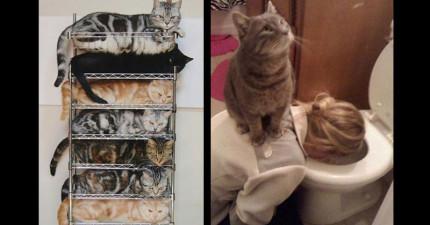 22隻「終於在家中找到最舒適休息地點」的心滿意足貓咪!