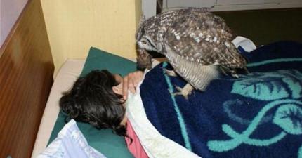 他們拯救了這隻貓頭鷹,結果放生後這4年來他定期都會帶「拌手禮」給這戶人家!