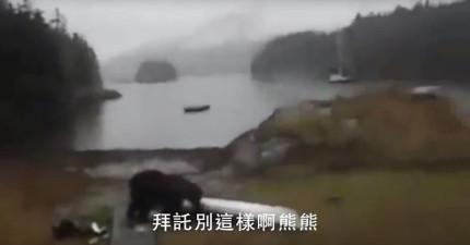 她在野外遇到黑熊後拿出胡椒噴霧防身,於是這隻「聽不懂英文」的黑熊決定轉身給她一點教訓...