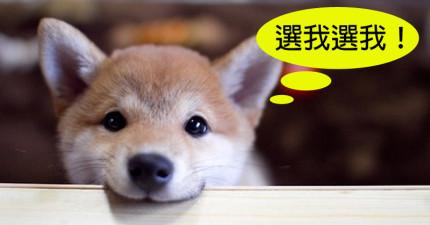 有了這個配對準確度高達90%的神奇網站,以後狗狗棄養率就能大幅降低了!