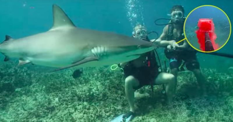他們賭上性命「把自己的血倒在海裡」測試鯊魚的反應,但真正讓鯊魚瘋狂暴動的原因你絕對想不到!