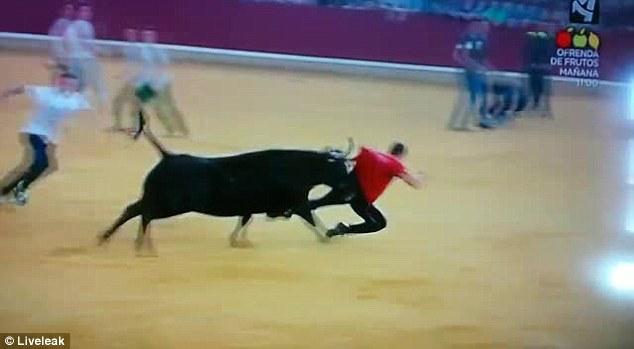 這隻鬥牛逮到機會沒有殺了鬥牛士,卻也在全世界面前羞辱他到沒臉見人的地步!