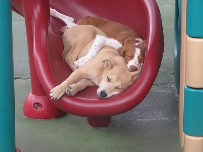 21隻保護你一整天已經累到爆的「就地昏睡毛寶貝」。