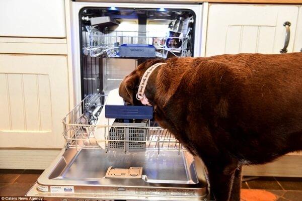 他們花了120萬改造廚房,就只為了阻擋這隻「為了吃什麼難關都能突破」的大胃王狗狗!